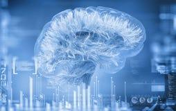 Hersenenverbindingen Stock Fotografie