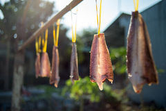 Herstellung der getrockneten Fische Lizenzfreie Stockbilder