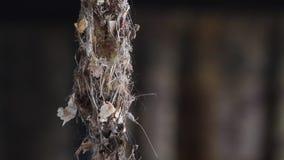 Herstellung des Nestes stock video footage