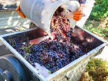 Herstellung des Weins stockbilder