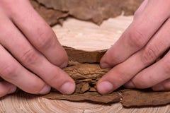 Herstellung von Zigarren von getrocknet herauf Blätter Stockfoto