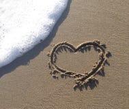 hert bij het strand Stock Foto