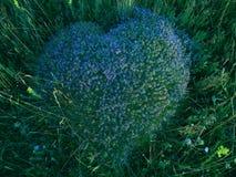 Hert bloemen royalty-vrije stock foto's