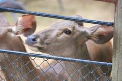 Herten stock foto