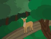 Herten in bos Stock Afbeeldingen