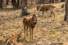 Herten in de aardhabitat Stock Foto's