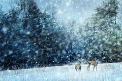 Herten in de winter Royalty-vrije Stock Foto's