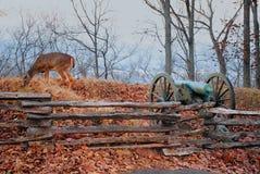 Herten die dichtbij Kanon weiden stock foto