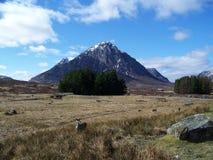 Herten en Bergen in Schotland Stock Afbeeldingen