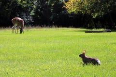 Herten en Konijntje bij onze binnenplaats royalty-vrije stock afbeelding