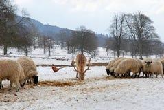 Herten, fazant en schapen in de sneeuw Royalty-vrije Stock Fotografie