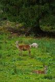 Herten in het bos royalty-vrije stock fotografie