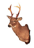 Herten hoofdtaxidermie Stock Afbeelding