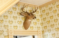 Herten hoofdtrofee op muur Royalty-vrije Stock Fotografie