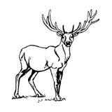 Herten met grote hoornen Royalty-vrije Stock Afbeelding