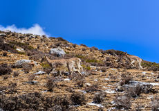 Herten op de sneeuwbergen Royalty-vrije Stock Foto