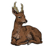 Herten op een witte achtergrond Royalty-vrije Stock Afbeelding