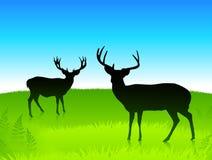 Herten op het groene gebied met blauwe hemelachtergrond Stock Fotografie