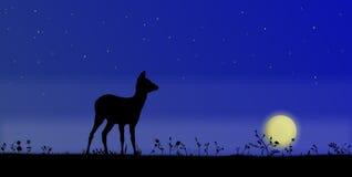 Herten op ingediend, bij nacht Stock Afbeelding