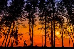 Herten via silhouet Royalty-vrije Stock Afbeelding
