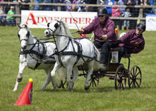 Herts County Show Scurrying Stock Image