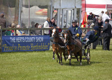 Herts County Show Scurrying Stock Photo