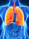 Hervorgehobene männliche Lunge Lizenzfreies Stockbild