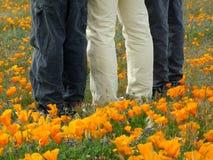 Hervorragend in Poppy Field Stockfotos