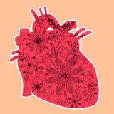 Herz anatomisch - doddle Kunsttechnik, Valentinstag stock abbildung