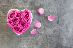 Heart of roses in pink on grey background royalty free stock photography