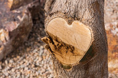 Herz-Baum Stockfoto