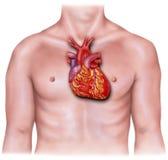Herz - bedeckt auf dem männlichen Torso, entflammt stockbild