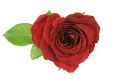 Herz-Blumenblätter Stockfotos