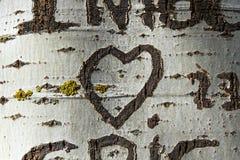 Herz, das einen Baum graviert stockfotografie