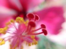 Herz der Blume Stockfoto