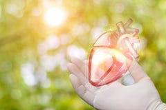 Herz in der Hand des Chirurgen lizenzfreie stockfotos