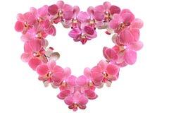 Herz der Orchidee blüht für den Frühling internationalen Frauen ` s Tages Stockbild