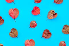 Herz-förmiges Muster des purpurroten Herbstlaubs auf Türkispapier, abstrakter Herbsthintergrund, stockfotografie