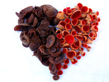 Herz-Formpilzstillleben mit den braunen und roten Pilzen Stockbilder