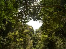 Herz formte Loch in den Bäumen im Mokarot Emerald Cave in Ko Muk, Ko Lanta, Thailand stockfotografie