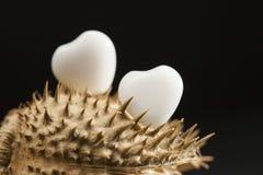 Herz formte weißen Achat auf Trockenfrüchten der wild wachsenden Pflanze mit Schwarzem Lizenzfreies Stockfoto
