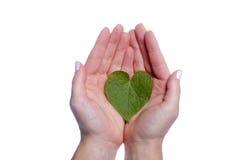 Herz-geformtes Blatt in den Mädchen-Händen Stockfoto