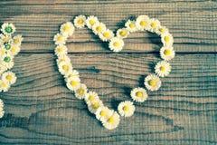 Herz gemacht von den Gänseblümchenblumen Stockfoto