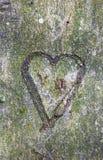 Herz geschnitzt im Baum Stockbild