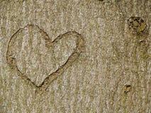Herz geschnitzt im Baumstamm Lizenzfreie Stockfotos