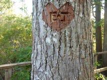 Herz graviert auf Baum lizenzfreies stockbild