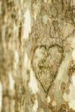 Herz graviert im Stamm eines Baums lizenzfreie stockbilder