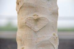 Herz im Baumstamm Stockfoto