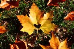 Herz im Herbstblatt auf einem Hintergrund der Herbstnatur Lizenzfreie Stockbilder