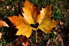 Herz im Herbstblatt auf einem Hintergrund der Herbstnatur Lizenzfreie Stockfotografie